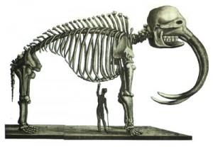 Een vleesetende mamoet