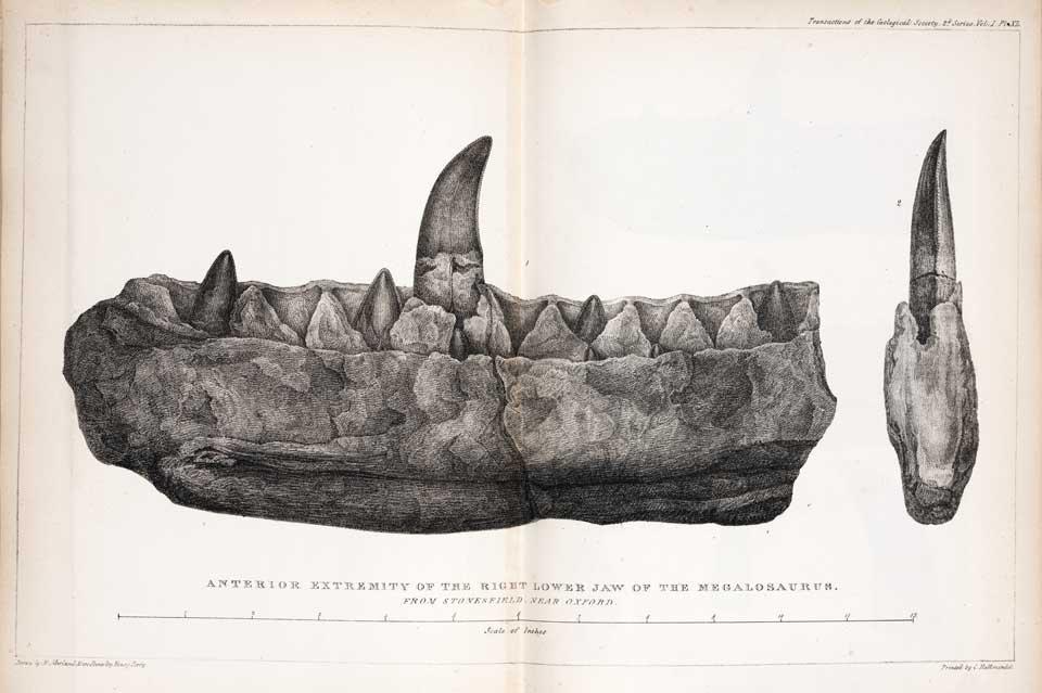 Megalosaurus kaak